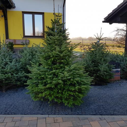 Vánoční stromky 2019