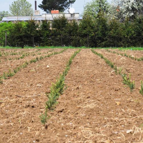 Péče o zeleň – pěstování a prodej vánočních stromků ve Frýdku-Místku