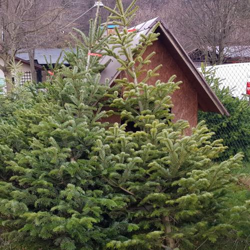 Prodej Vánočních stromků Rožnov pod Radhoštěm