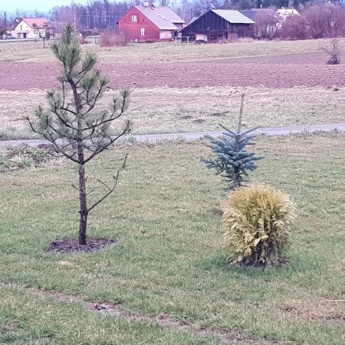 Stromy a keře do zahrady